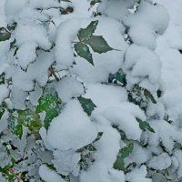 Первый снег комом :: Люша