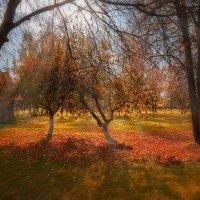 Золотая осень :: Эльмира Суворова