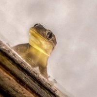 Привет, я геккон. :: Oleg