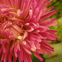 Осенний цветок :: Виктория Власова