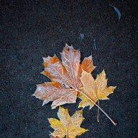 Осенний натюрморт. :: Юрий