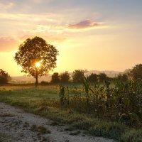 утро красит нежный светом... :: Elena Wymann