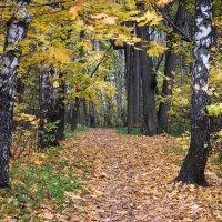 Осень :: Владимир Безбородов