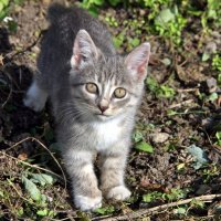 little Cat in the garden :: valery60