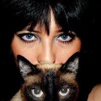 Кошки :: Natalia