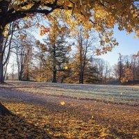 Осень золотая :: Алёнка Шапран