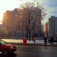 Дерево на остановке :: Светлана Лысенко