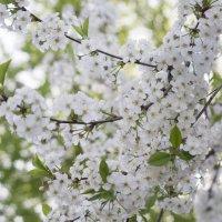 воспоминания о весне :: dasik tarasova