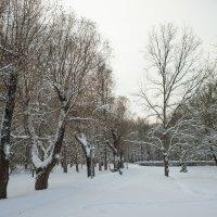 Снежный ноябрь 5 :: Виталий