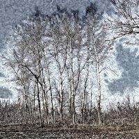 А через неделю пойдёт снег... :: Юрий Гайворонский