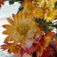 первый снег ноября :: Нади часоК