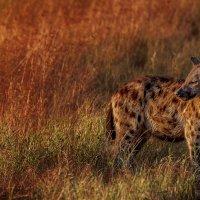 Рассветное позирование...Танзания! :: Александр Вивчарик
