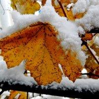 Первый снег :: Владимир