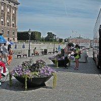 Прогулки по  Стокгольму. :: Виталий Селиванов