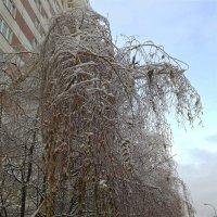 На поклон зиме... :: Светлана Лысенко