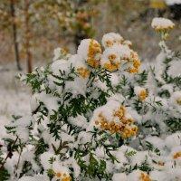 Первый снег :: Валерий Толмачев