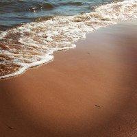 Ладожский берег . Июль. :: екатерина
