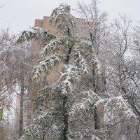 В город пришла зима :: Дмитрий Никитин