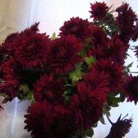 Букет хризантем любимых :: марина ковшова