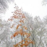 Одиноко стоящий дубок :: Сергей Тарабара