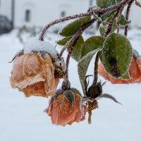 Зима пришла рано... :: Тимофей Черепанов