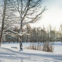 Снежный ноябрь 9 :: Виталий