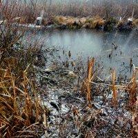 снегопад на болоте :: Александр Прокудин