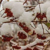 укрытые снегом :: Анна -