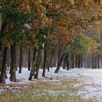 Природа ноября :: Ирина Олехнович