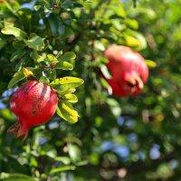 Осенние плоды :: Alexander Varykhanov