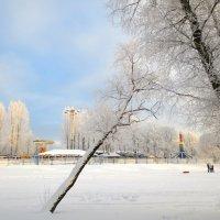 в зимнем парке :: Елена