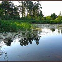 На озере лесном :: Наталья