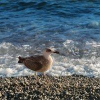 Утро, море, я и чайка :: Shapiro Svetlana