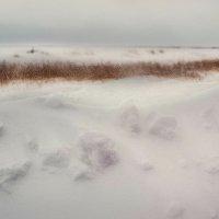 Снежок :: Наталья Копылова