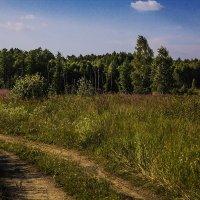 В лес :: Александр