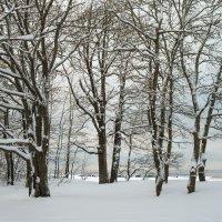 Снежный ноябрь 13 :: Виталий