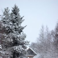 Зима. :: Андрей Скорняков