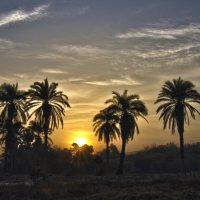 Там великаны вековые встречают солнце золотое :: Ефим Журбин