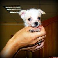 Картина, корзина, картонка и маленькая собачонка..:) :: Андрей Заломленков