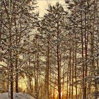 Первая лыжня :: Юрий Спасенников