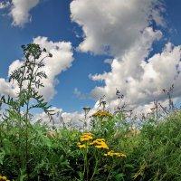 Цветы и облака :: Валерий Талашов