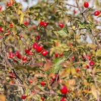 Осенний урожай :: Елена Васильева