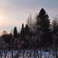 На закате в ноябре :: Вера Андреева
