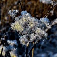 Снежное сияние... :: Владимир Ильич Батарин