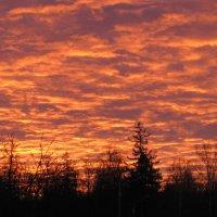 Восход в ноябре :: Елена Безнасюк
