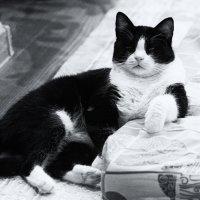 Кот Пряник-Царская морда :: Val Савин
