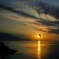 Ранняя пташка :: Александр Бойко
