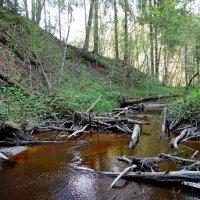 Лесной ручей :: Андрей Буховецкий