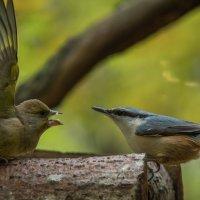 Angry birds :: Kaspars Stūrītis