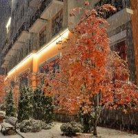 Первый снег :: Сергей Докукин